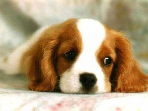 Potty Patch tapete de entrenamiento para perros Pipi Pet