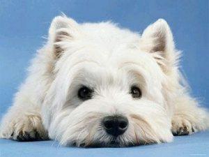 Potty Patch bandeja sanitaria de entrenamiento para perros Pipi Pet
