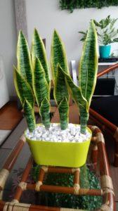 Planta Artificial Sanseveiria